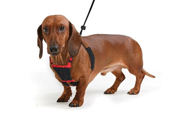 Sporn No Pull and No Choke Puppy Harness