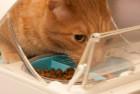 SureFlap Microchip Cat Feeder
