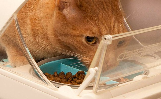 SureFlap Microchip Cat Feeder