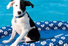 SwimWays Spring Paddle Paws Dog Pool Float