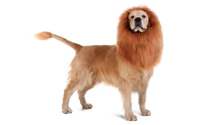 TOMSENN Dog Lion Costume