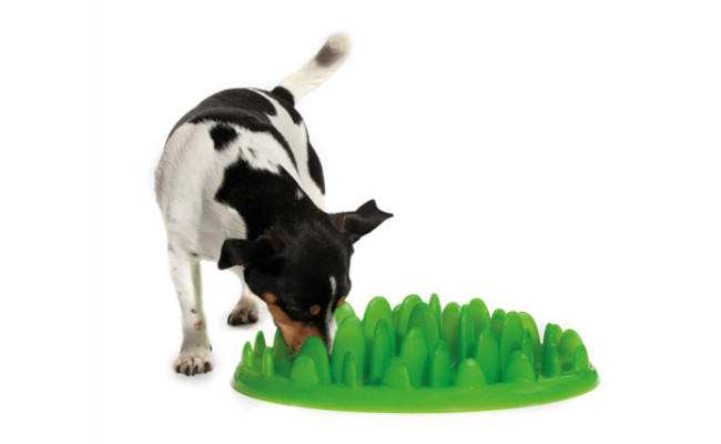 The Company of Animals Green Slow Feeder Dog Bowls