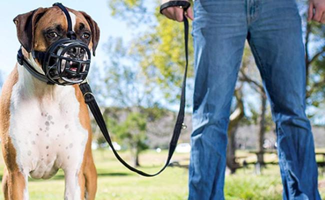 The Company of Animals Ultra Muzzle