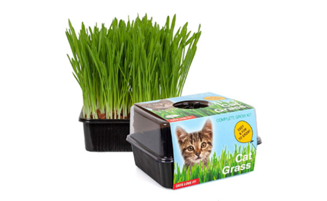 TotalGreen Holland Cat Grass Kit