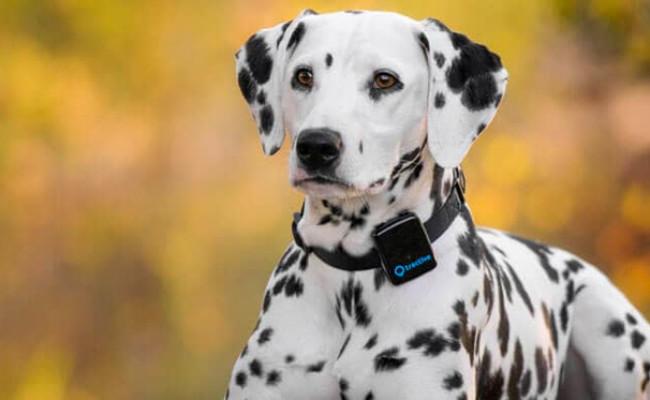 Tractive 3G GPS Tracker & Dog Monitor