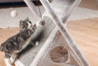 TRIXIE Pet Products Miguel Fold Scratching Tower