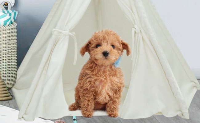 UKadou Teepee Tent for Dogs