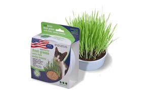 Van Ness Grass for Cats