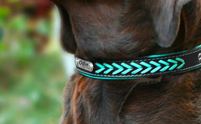 Vcalabashor Custom Leather Dog Collar