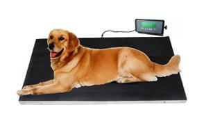 Veterinary Dog Scale IBE SUPPLY