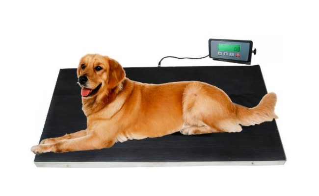 Veterinary Dog Scale with Stainless Steel Platform
