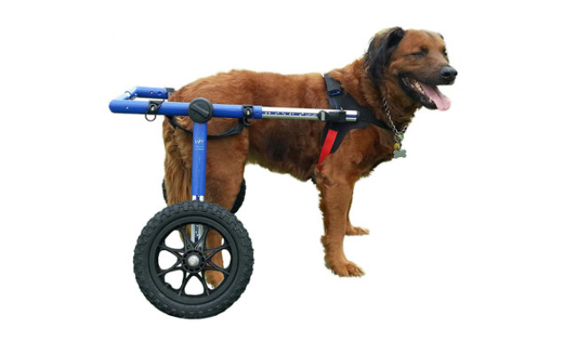 Walkin Wheels Dog Wheelchair