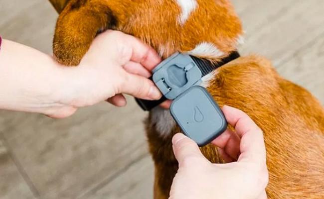 Whistle Pet Tracker & Dog Monitor