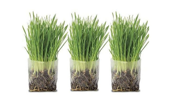 Window Garden Cat Grass Kit