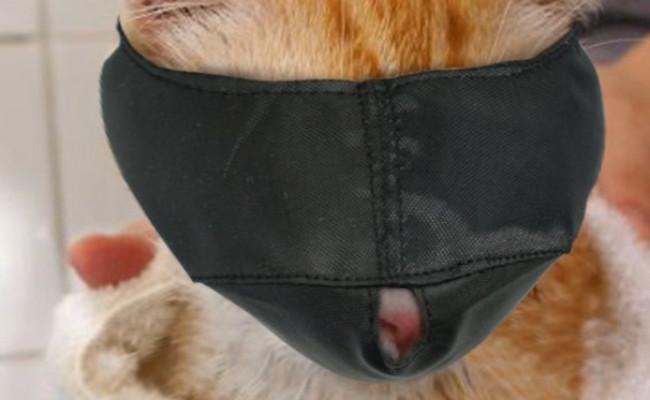 Xbes Nylon Cat Muzzle