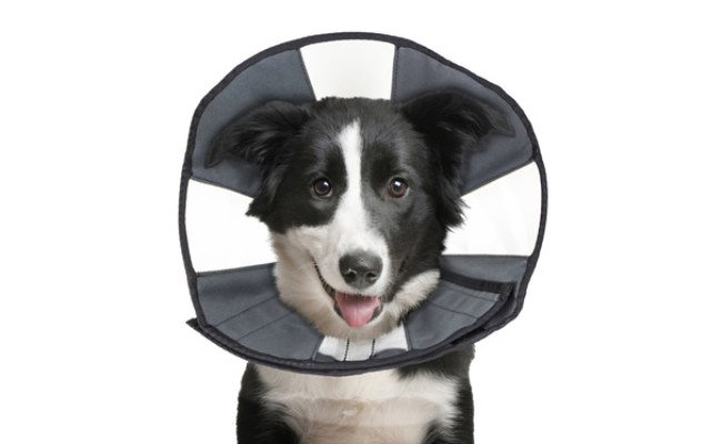ZenPet Comfortable Soft Recovery Collar