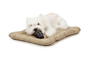 affordable dog bed