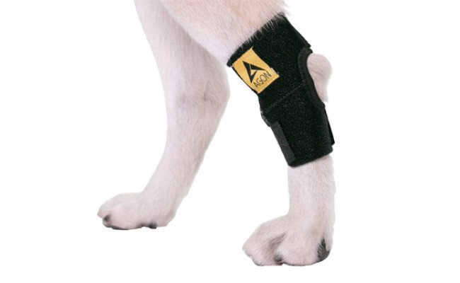 agon dog knee braces