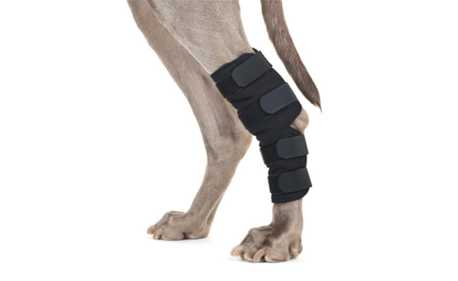 back on track dog knee braces