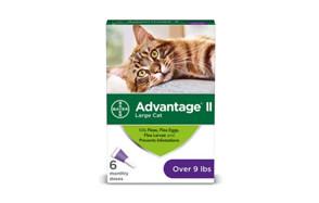 best choice cat flea treatment