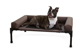 best choice raised dog bed