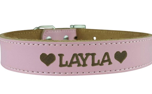 custom catch dog collar