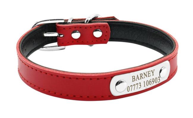 didog leather dog collar