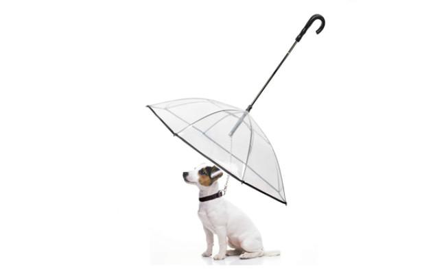 enjoying dog umbrella