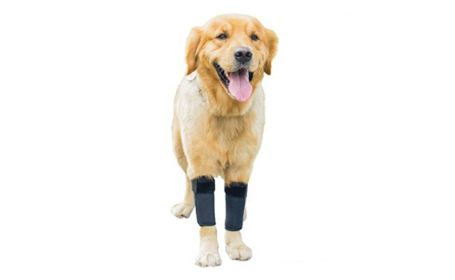gniks dog knee braces