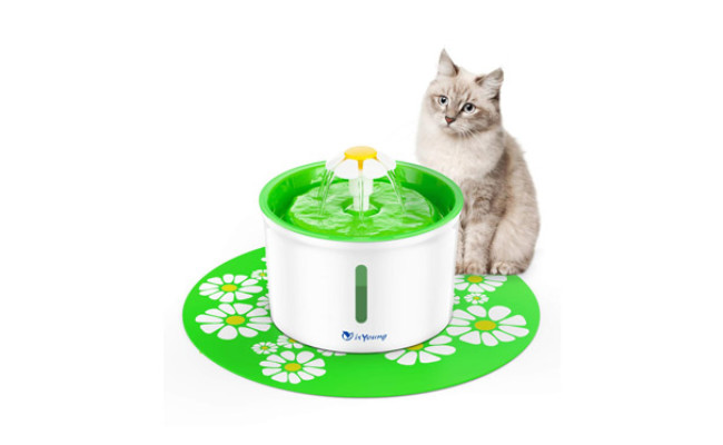 isYoung Cat Health Caring Fountain