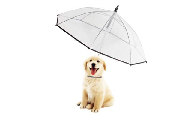 morjava dog umbrella