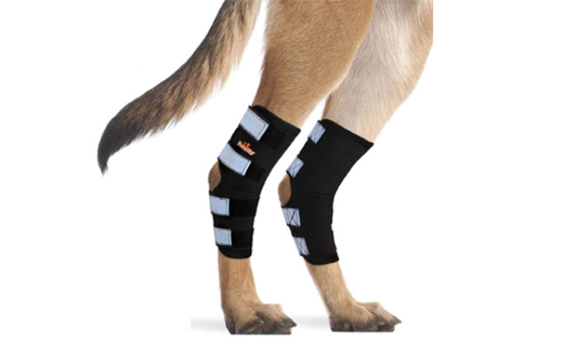 neoally dog knee braces