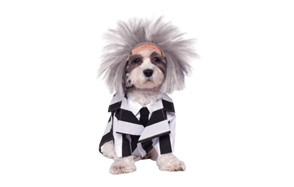 premium pick dog costume