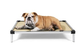 premium pick raised dog bed