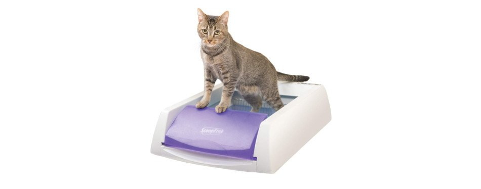 The Best Self Cleaning Litter Boxes Review In 2020 My
