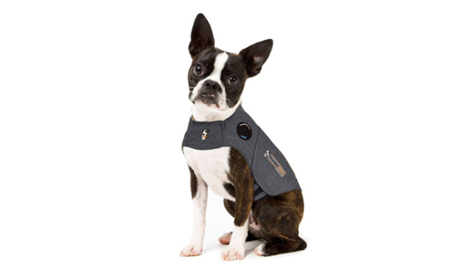 thundershirt dog jacket