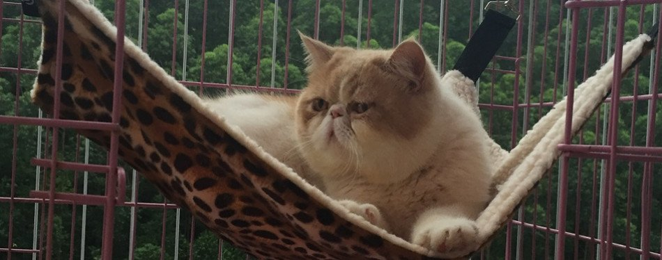 useful thingy cat hammock